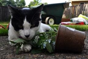 Catnip Inspector