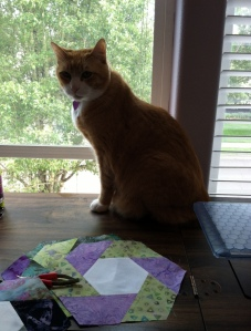 Quilt inspector, Tiger, in window