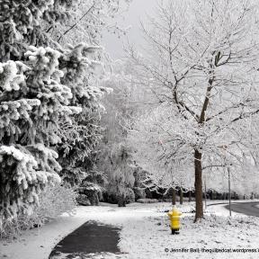 Frozen Sidewalk
