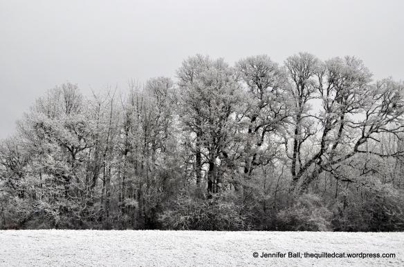 Freezing Fog Landscape