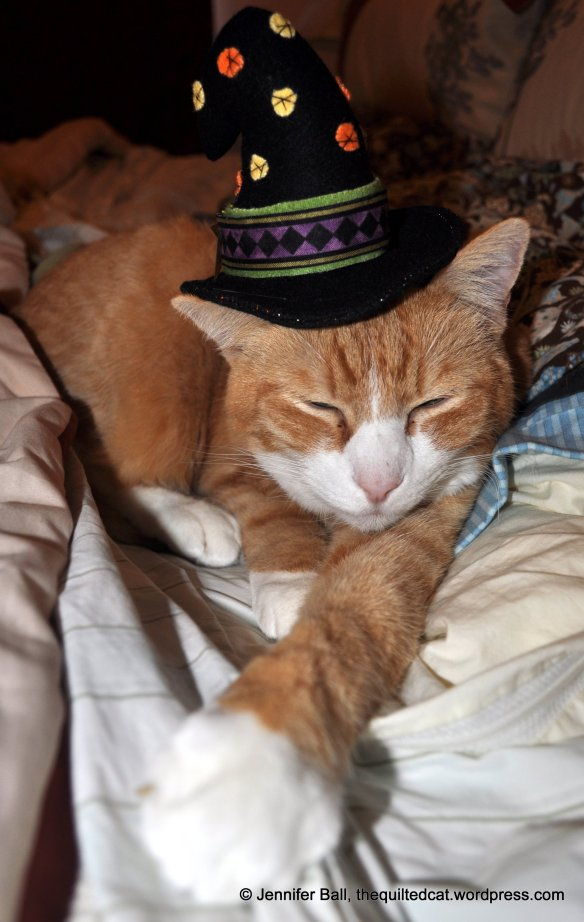 Tiger likes the witch hat