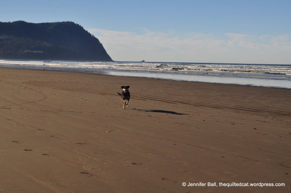 Brutus at Seaside, Oregon