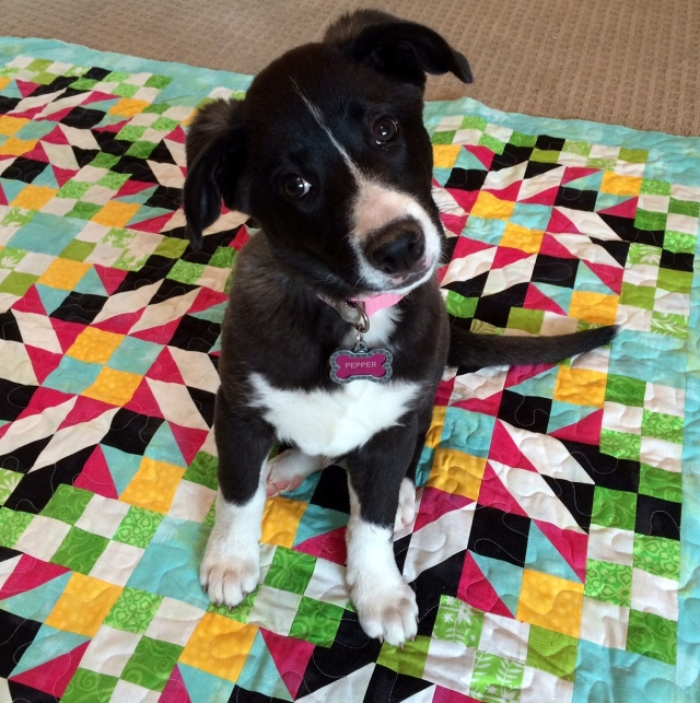 Pepper Sits on a Grand Illusion Mystery Quilt