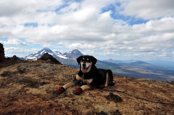 Brutus hikes the Broken Top trail with the Three Sisters in the background