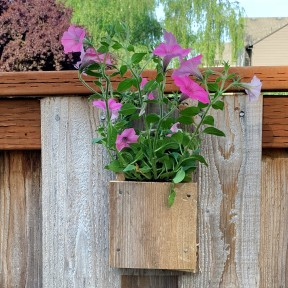 Flower box on the fence